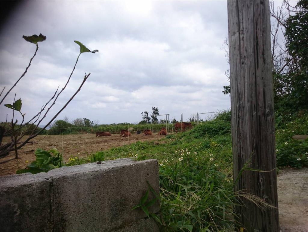 f:id:ishigakijimaumahiroba:20180220112917j:image
