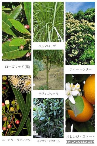 f:id:ishiimachiko141hair:20200130165601j:image