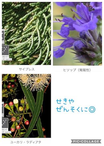 f:id:ishiimachiko141hair:20200130165640j:image