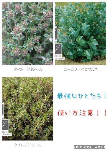 f:id:ishiimachiko141hair:20200130165851j:image