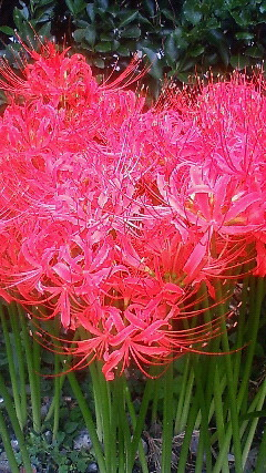 f:id:ishiiyoshito:20100930110900j:image
