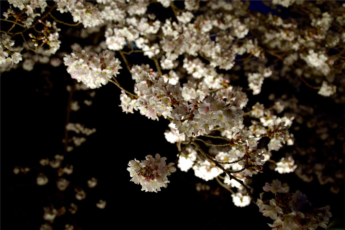f:id:ishiiyoshito:20210330151042j:plain