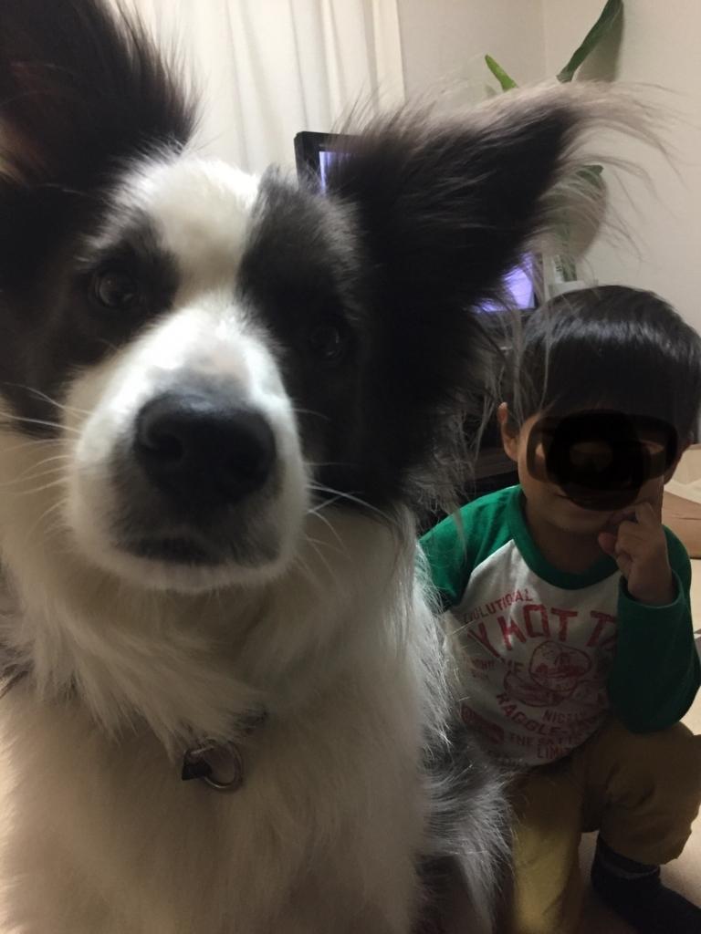 f:id:ishijiro2:20171025074821j:plain