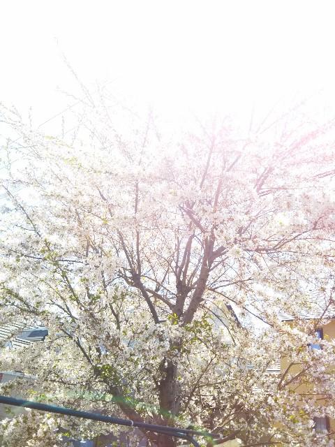 f:id:ishikara:20180330155748j:image