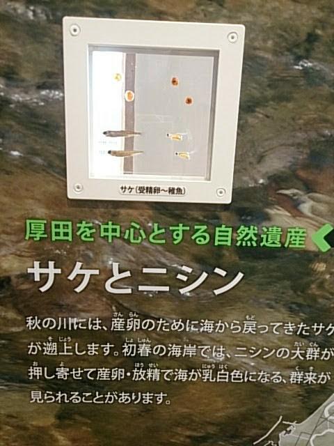 f:id:ishikara:20180424223618j:image