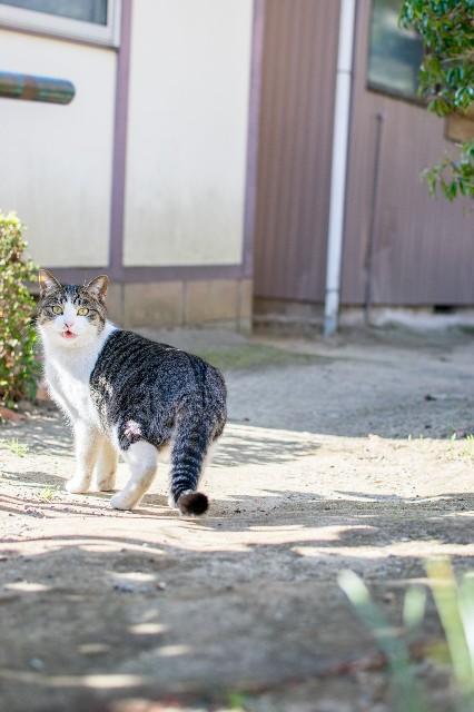 f:id:ishikara:20190222141037j:image