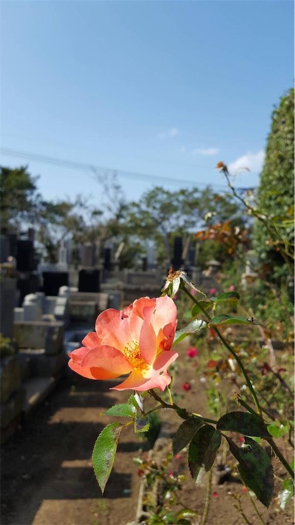 f:id:ishiyoshi1444:20161108085745j:image