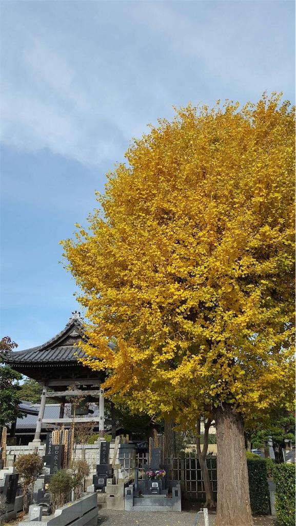 f:id:ishiyoshi1444:20161121000519j:image
