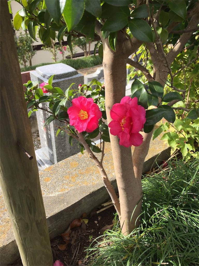 f:id:ishiyoshi1444:20161128201436j:image
