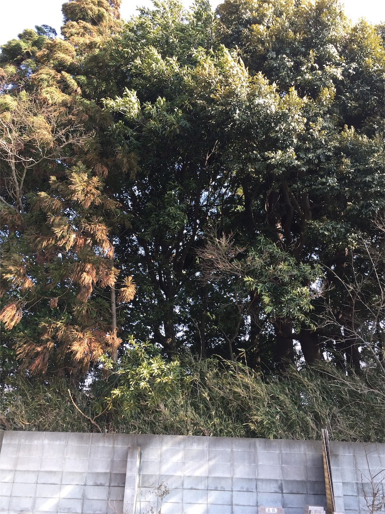 f:id:ishiyoshi1444:20170219010239j:image
