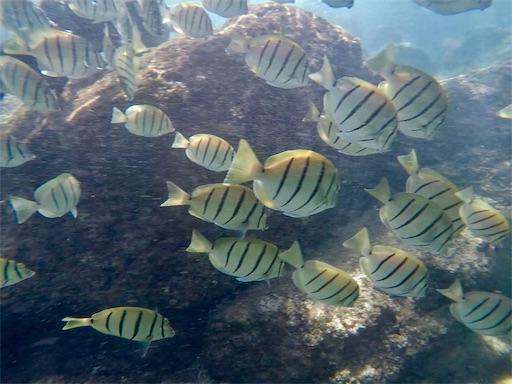 f:id:islandfish:20190922034254j:image