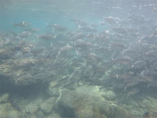 f:id:islandfish:20190922034338j:image