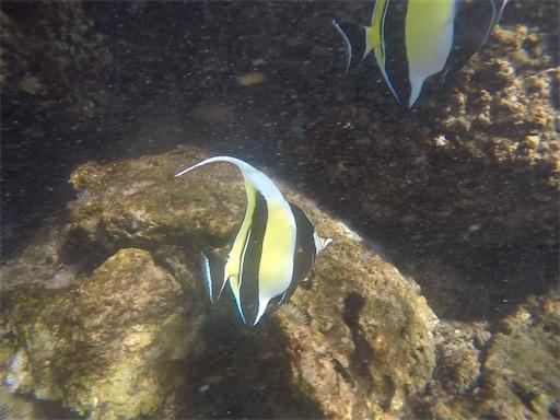 f:id:islandfish:20190922034345j:image