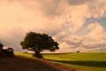 栗の木のある初秋