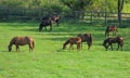 競馬界では有名な牧場の馬