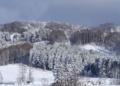 木々の雪化粧