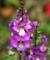 庭の花1-1