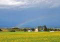 虹と黄色の世界