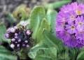 小さな小さな花5