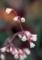 小さな小さな花1