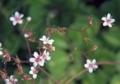 小さな小さな花2