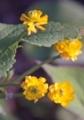 小さな小さな花6
