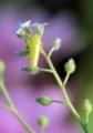 小さな小さな花4