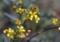 小さな小さな花3