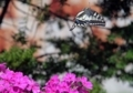 アゲハ蝶の舞い3