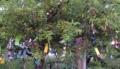 庭の木に七夕飾り