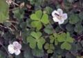 小さな花4