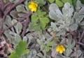 小さな花1