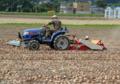 玉ねぎ収穫作業1