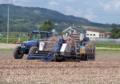玉ねぎ収穫作業2
