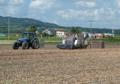 玉ねぎ収穫作業3