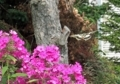 アゲハ蝶の舞い11
