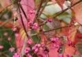 ピンクの実