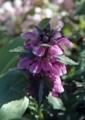 北海道5月下旬の花7