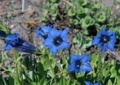 北海道5月下旬の花5