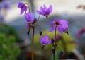 北海道5月下旬の花2