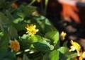 北海道5月下旬の花1