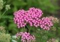6月下旬の花11
