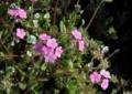 6月下旬の花10