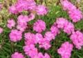 6月下旬の花3