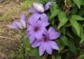 6月下旬の花2