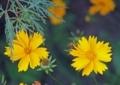 7月上旬の花3