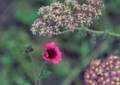 7月上旬の花2