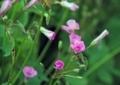 7月上旬の花1