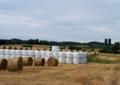 牧草の収穫7