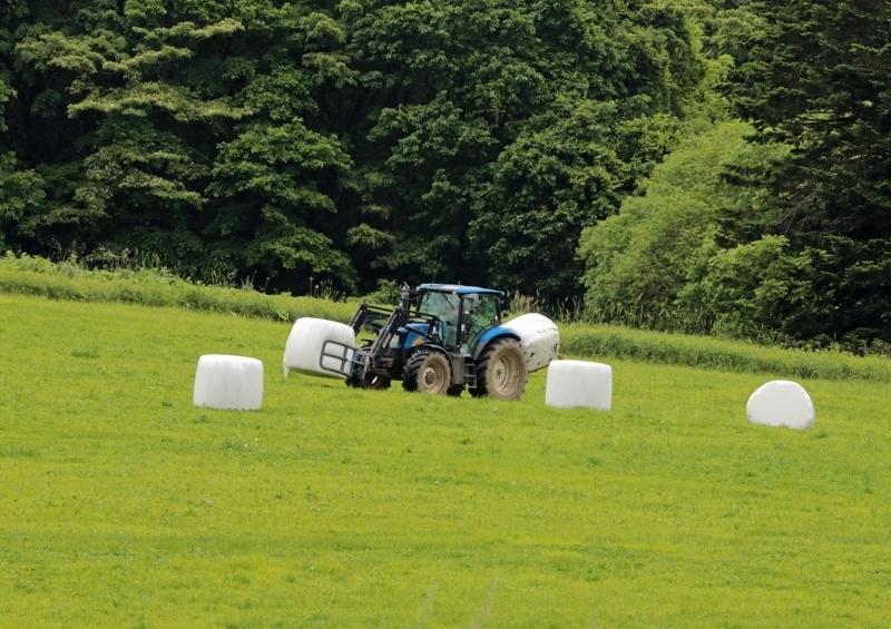 牧草の収穫6